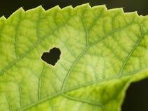 Coeur en nature Photos libres de droits