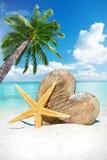 Coeur et étoiles de mer en bois sous le palmier Photographie stock libre de droits