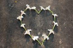 Coeur et amour de fleur Photographie stock libre de droits