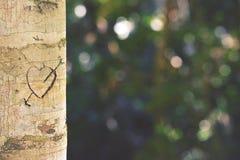 Coeur et flèche découpés dans le tronc d'arbre Photographie stock libre de droits