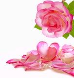 Coeur et pétales de rose d'amour Image libre de droits