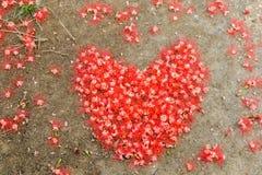 Coeur fait à partir de la fleur rouge au sol Photographie stock libre de droits