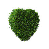 Coeur fait à partir du congé vert Image stock