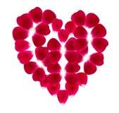 Coeur fait de beaux pétales de rose Images libres de droits