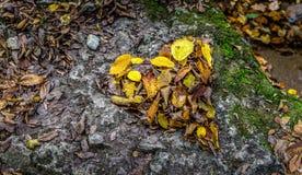 Coeur fait de feuilles sur une roche Images stock