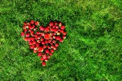 Coeur fait de fraises sur une pelouse verte Image libre de droits