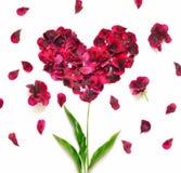 Coeur fait de pétales de fleur Coeur rouge de pétales au-dessus du fond blanc Vue supérieure Amour et thème romantique Photo libre de droits