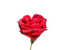 coeur fait en rose de rouge sur le fond blanc Photo libre de droits
