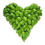 Coeur hors de basilic Photo stock