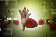 Coeur humain illustration stock