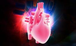 Coeur humain Image stock