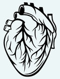 Coeur humain Images stock