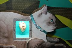 Coeur mammifère images libres de droits