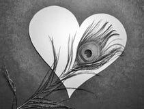 Coeur mystérieux noir et blanc de valentines avec la plume de paon Photographie stock