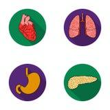 Coeur, poumons, estomac, pancréas Les organes humains ont placé des icônes de collection en Web plat d'illustration d'actions de  Photographie stock libre de droits