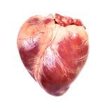 Coeur réel photographie stock