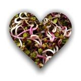 Coeur rempli de germes de radis illustration libre de droits