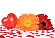 Coeur rouge avec la fleur de gerbera Photographie stock