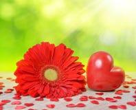 Coeur rouge avec la fleur de gerbera sur la table Photo libre de droits