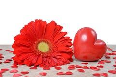 Coeur rouge avec la fleur de gerbera sur la table Image stock