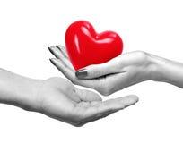 Coeur rouge chez la main de la femme et la main d'homme d'isolement sur le blanc Image libre de droits