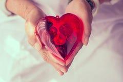 Coeur rouge dans des mains de l'aîné Image stock
