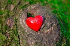 Coeur rouge dans la mousse dans les bois Photos stock