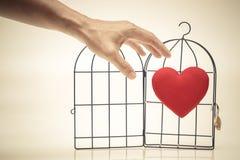 Coeur rouge dans une cage à oiseaux Photo libre de droits