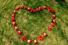 Coeur rouge de fleur de capoc de ceiba Images libres de droits