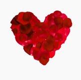 Coeur rouge de pétale rose Image stock
