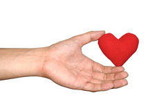 Coeur rouge de prise de la main de l'homme sur le fond de blanc d'isolat Photo stock