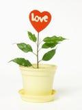 Coeur rouge mis en pot Photo libre de droits