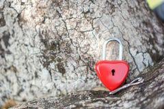 Coeur rouge principal sur une racine d'arbre, le concept de l'amour et Valentine& x27 ; s Image stock