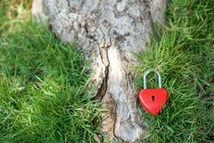 Coeur rouge principal sur une racine d'arbre, le concept de l'amour et Valentine& x27 ; s Images stock
