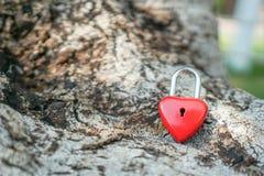 Coeur rouge principal sur une racine d'arbre, le concept de l'amour et Valentine& x27 ; s Images libres de droits