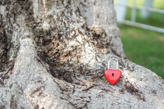 Coeur rouge principal sur une racine d'arbre, le concept de l'amour et Valentine& x27 ; s Image libre de droits