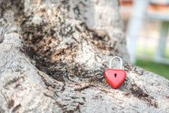 Coeur rouge principal sur une racine d'arbre, le concept de l'amour et Valentine& x27 ; s Photographie stock libre de droits
