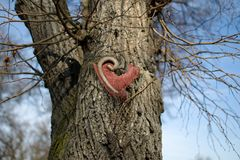 Coeur rouge sur l'arbre Photographie stock