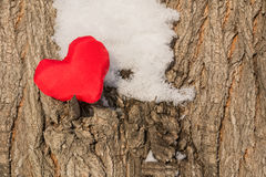 Coeur rouge sur l'arbre Photo libre de droits