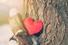 Coeur rouge sur l'arbre Image stock