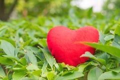Coeur rouge sur l'arbre avec les milieux verts avec l'espace de copie Images stock