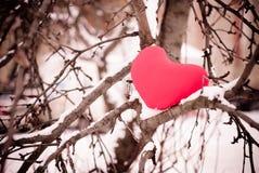 Coeur rouge sur l'arbre de neige Photos stock