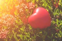 Coeur rouge sur l'arbre vert de fleur de transitoire pour le jour d'amour et de ` s de Valentine Photographie stock