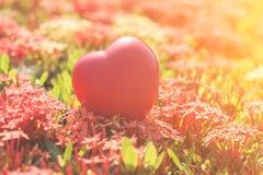 Coeur rouge sur l'arbre vert de fleur de transitoire pour le jour d'amour et de ` s de Valentine Photo libre de droits