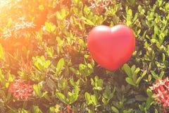Coeur rouge sur l'arbre vert de fleur de transitoire pour le jour d'amour et de ` s de Valentine Images libres de droits