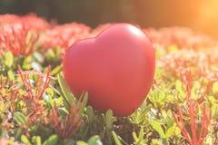 Coeur rouge sur l'arbre vert de fleur de transitoire pour le jour d'amour et de ` s de Valentine Photographie stock libre de droits
