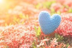 Coeur rouge sur l'arbre vert de fleur de transitoire pour le jour d'amour et de ` s de Valentine Photos stock