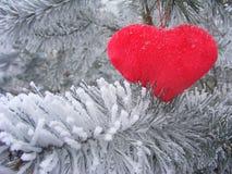 Coeur rouge sur la branche du pin pour le Saint Valentin Photographie stock libre de droits