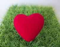 Coeur rouge sur une pelouse verte, fond intéressant au sujet de l'amour Photos stock