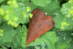 Coeur rouillé en métal entre les feuilles humides dans le jardin Images libres de droits